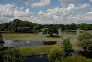 Nivy riek Morava a Dyje © Gerhard Egger_WWF